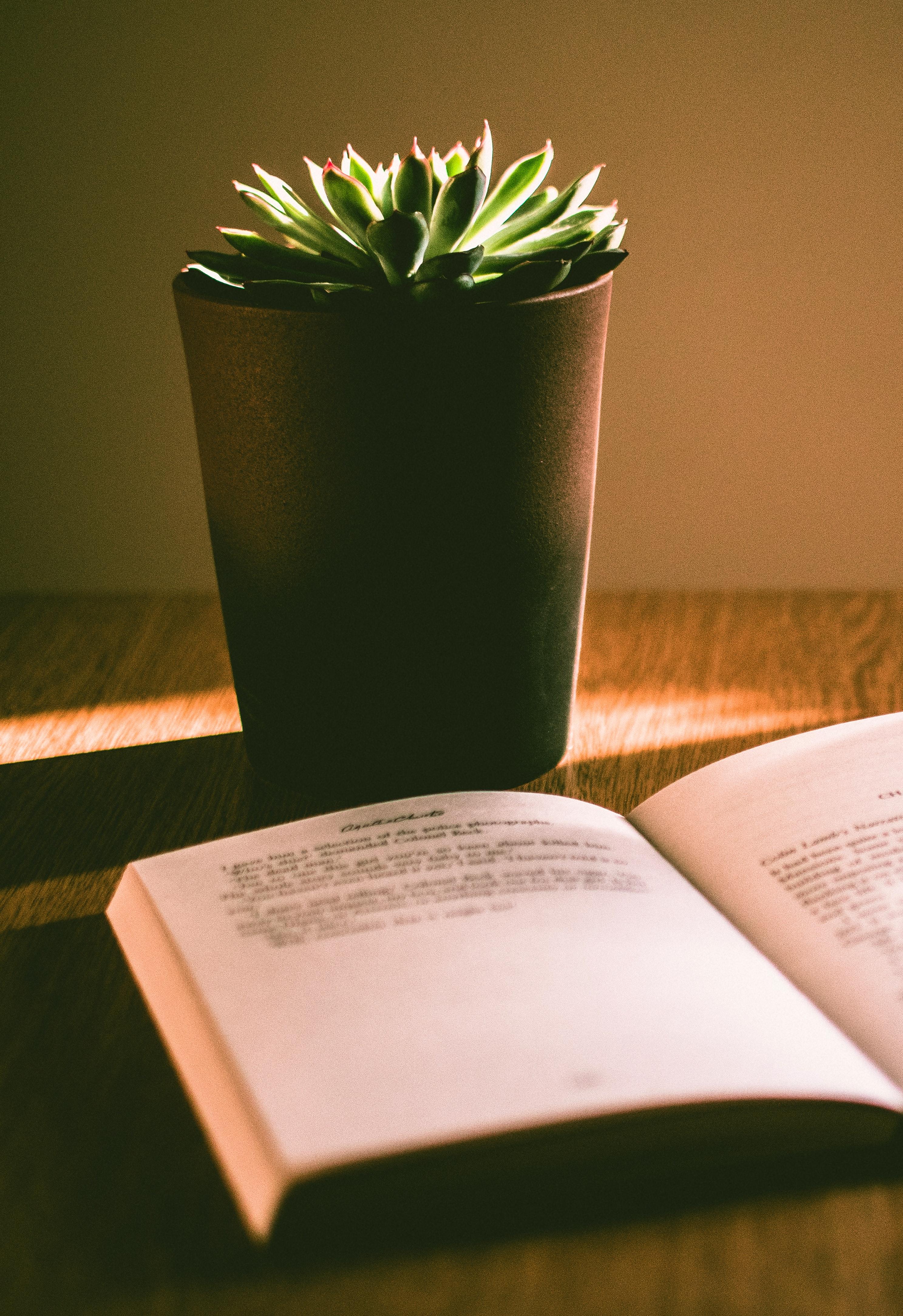 blur-book-botanic-1036372